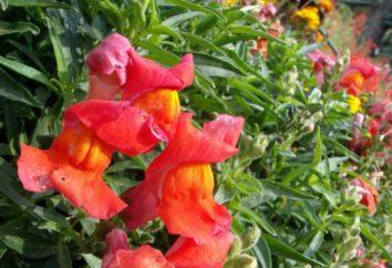 Plantas canteiros de flores de outono: nome. Outono flor do jardim: plantas, variedades e cuidados