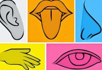 La mayor cantidad de información que recibe una persona por medio de los sentidos humanos …