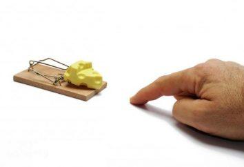 Mousetrap z własnymi rękami – skuteczne i proste!