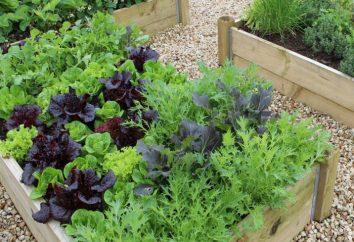 Légumes: la compatibilité avec la plantation dans le jardin