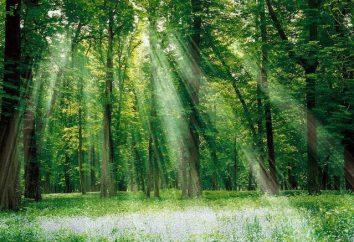 """Rima a palavra """"floresta"""" trará muitas maravilhas"""