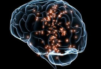 materia grigia e bianca del cervello
