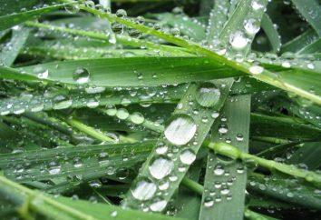 Lo que es sustancias hidrofóbicas?