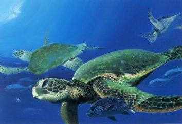 Takie śmieszne żółwie morskie