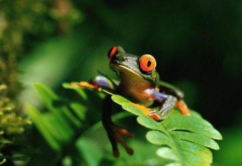 énigme amusante et drôle sur une grenouille pour votre progéniture