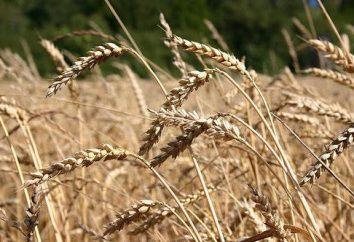 Rewolucja agrarna – że rewolucja agrarna … The w historii świata