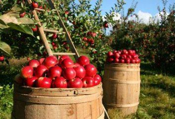 Il fertilizzante necessaria per l'autunno mela