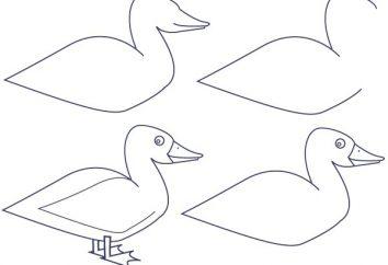 Jak narysować kaczkę pięknego?
