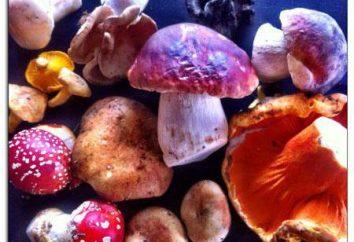 Che cosa è la micologia? Micologia – lo studio dei funghi