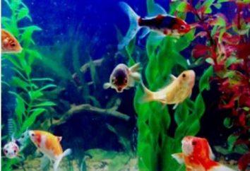 Ryby akwariowe: Kompatybilność gatunki