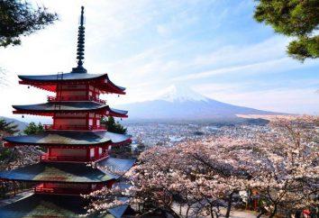 Udon – che cos'è? motivi giapponesi nella vostra cucina