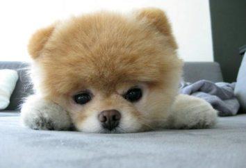 Pies, jak niedźwiedź – to po prostu cud, że należy dokonać