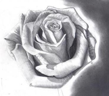 Mochten Sie Erfahren Wie Eine Rose Von Bleistiften Zu Zeichnen