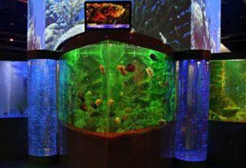 Oceanarium a Krasnodar – un'incarnazione successo della straordinaria bellezza del mondo sottomarino