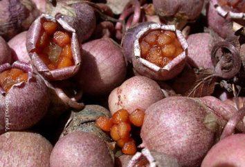 Jak rozwijać cyklamen z nasion: tajemnice sukcesu