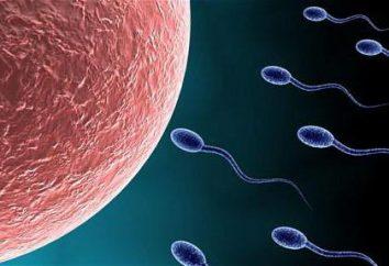 Wolnorotujące spermy: przyczyny i leczenie