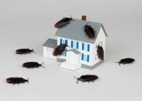 Jak radzić sobie z karaluchami w środkach zaradczych mieszkanie ludowych? dobra rada