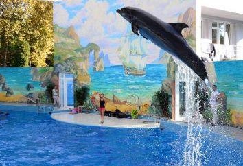 """Delfinario """"Riviera"""" (Sochi): horarios, direcciones, fotos"""