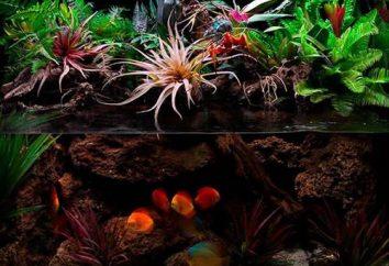 Aquarium: Gestalten Sie Ihre eigenen Händen (Foto)