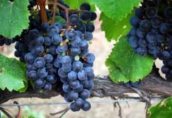 Unikalna starożytny przepis. Wino z Isabella w domu