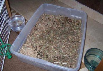 Jak nauczyć królika z patelni: skuteczne techniki i przydatnych wskazówek