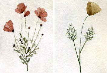 Wir machen ein Herbarium mit dem Kind für die Grundschule