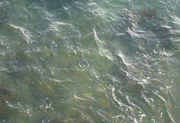 Interpretazione dei sogni: acqua torbida. Perché il sogno di acqua fangosa