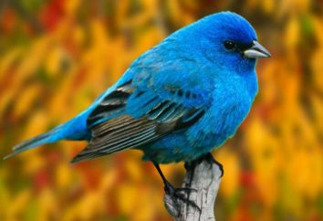 Struttura esterna e interna degli uccelli. Gli organi interni degli uccelli