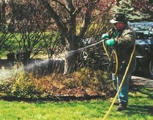 pulvérisation de printemps des arbres fruitiers et des arbustes. Comment pulvériser les arbres au printemps