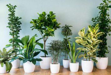 Variété de plantes d'intérieur. Les noms, la culture et l'entretien