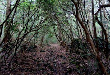 Las Aokigahara – japoński las samobójstw u stóp góry Fuji