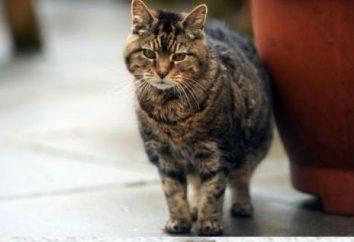 Il più vecchio gatto nel mondo