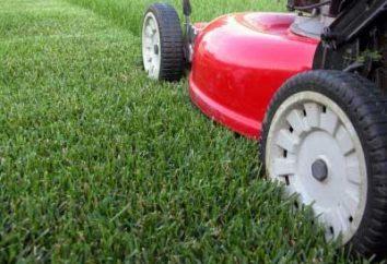Koszenie trawnika. Jak prawidłowo dbać o żywą dywanie