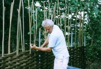 Pleciony ogrodzenie przez własne ręce jest doskonałym dodatkiem do każdego miejsca