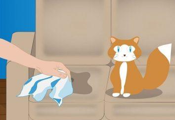 Jak wyeliminować zapach moczu kota? Wskazówki i sztuczki