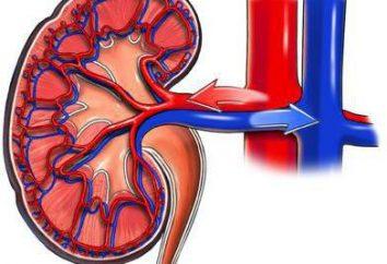 Zwężenie tętnicy nerkowej: możliwe przyczyny, objawy i cechy obróbki