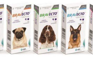 """Las tabletas masticables Bravecto ( """"Bravekto"""") para perros: opiniones, instrucciones, precios"""