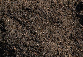 Como desinfectar o solo para o plantio. descontaminação de solos