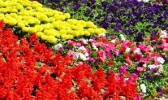 Filetes de flores perenes – tipos e uma breve descrição