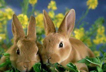 fumier de lapin comme engrais: commentaires
