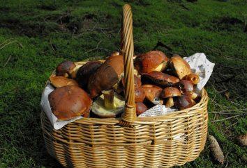 Imparare a cucinare funghi porcini fritti