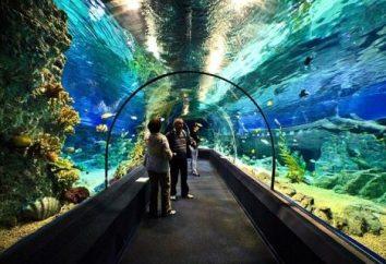 Oceanarium in Sotschi: Fotos, Bewertungen, Adresse