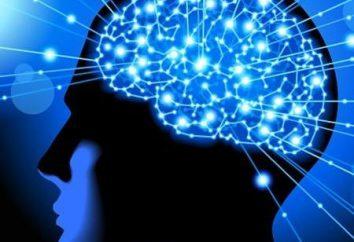 Skuteczne witaminy dla pamięci dorosłych. Jakie leki poprawiają pamięć