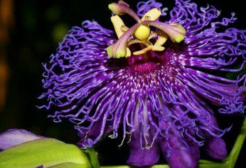 Fleurs exotiques: la beauté et l'originalité de la maison