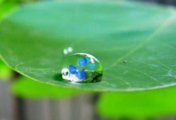 Bilans wodny – kluczowy wskaźnik ekosystemu