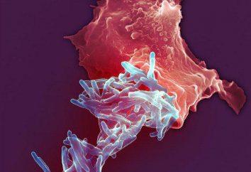 Patogeneza gruźlicę. Etiologia gruźlicy. Objawy gruźlicy