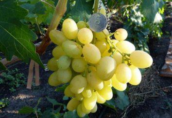 Grapes Blagovest: description et caractéristiques des variétés
