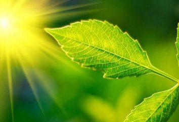 impianti di CO2 deve fare che cosa? Come a dimostrare la necessità di CO2?