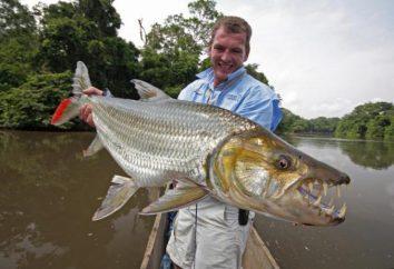 Tueur de poissons. habitants dangereux des mers et des océans
