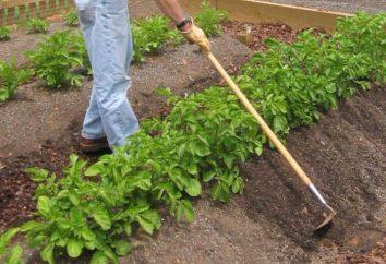 Jak spud ziemniaki motorowe ręcznie?